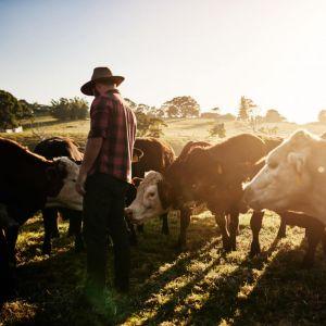Zavarovanje posevkov in živine